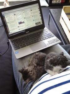 Les chatons trouvent mon bureau confortable