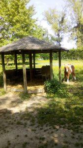Walibi-rhones-alpes-idee-sortie-ete-2018-mini-ferme-poney-3-min